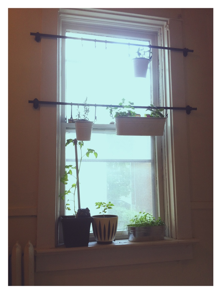 My window garden. I have no balcony, but that doesn't mean I can't grow inside! rails, buckets and hooks are Fintorp from Ikea.: Ikea Curtain Rod, Kitchen Window, Diy Hanging Plant, Fintorp Rail, Ikea Idea, Bathroom Window Curtain