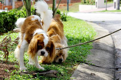 Providing potty training to puppies is a time taking process and should keep patience. You can meet with our expert to get further info.
