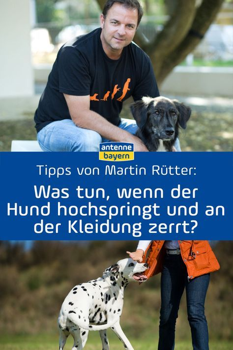 Martin Rütter Tipps
