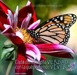 Crisálida, una esperanza perenne...: Alas de amor, vida, esperanza, fortaleza y libertad: 30 frases de Paulo Coelho