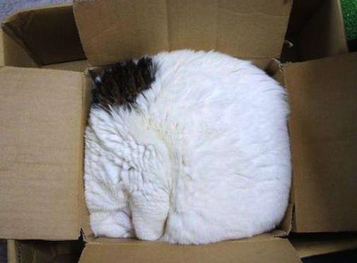 出られなくなった box of cat