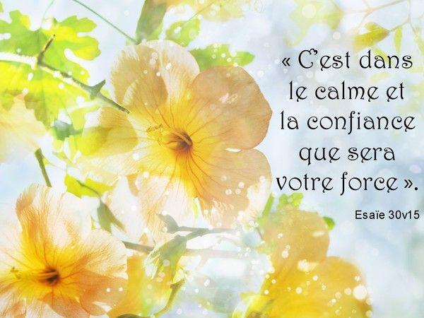 """Tableau """"fleurs jaunes"""""""
