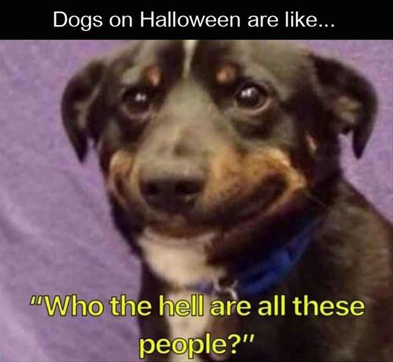 25 Pics Funny Dog Memes To Cheer You Up On A Bad Day Lovely Animals World Funny Animal Memes Funny Dog Memes Cute Funny Animals
