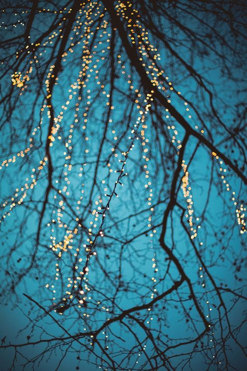 Lights on the branches.    http://www.flickr.com/photos/nit000/8287690629/sizes/l/in/photostream/