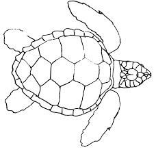 land turtle coloring - Google Search