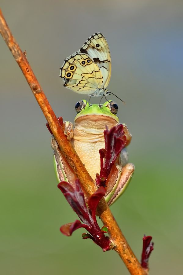 ✿⊱╮Frog and butterfly