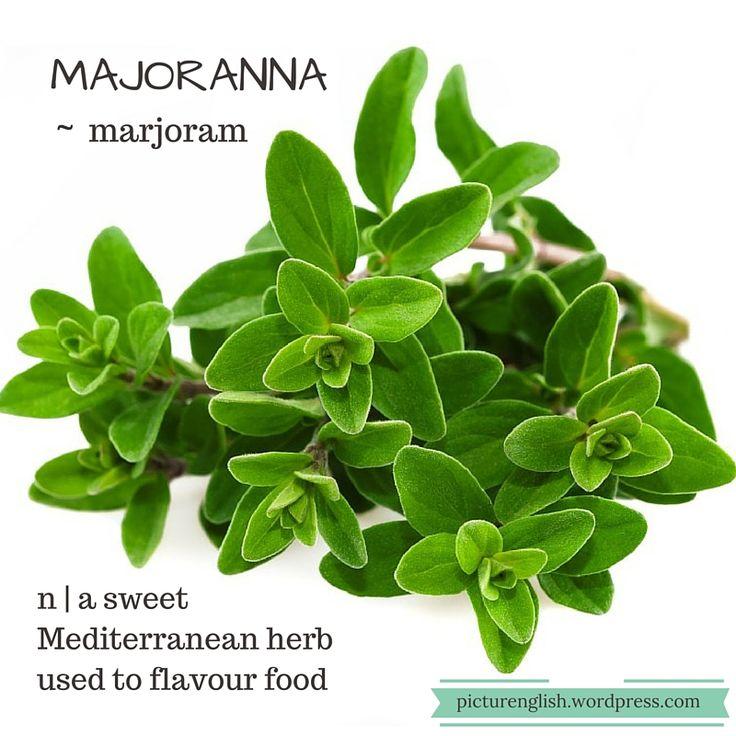 Marjoram / Majoranna