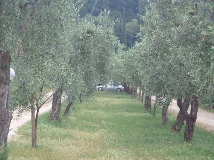 Wollte immer schon mal unter Olivenbäumen parken ...