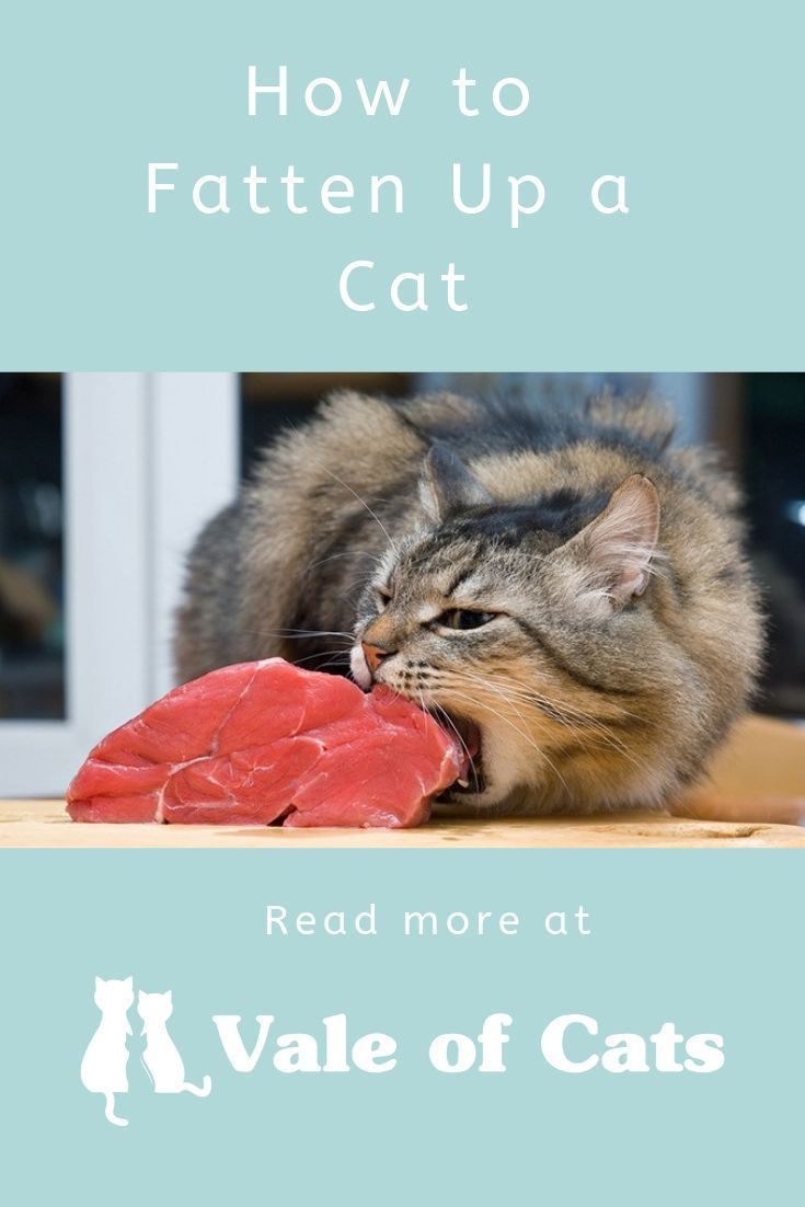 How To Fatten Up A Cat Cat Nutrition Cats Cat Reading