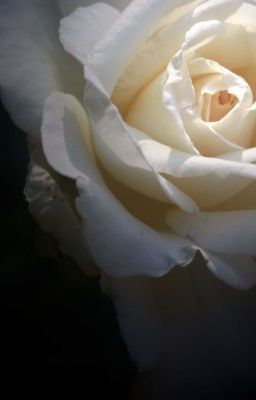 Biała Róża #wattpad #fanfiction