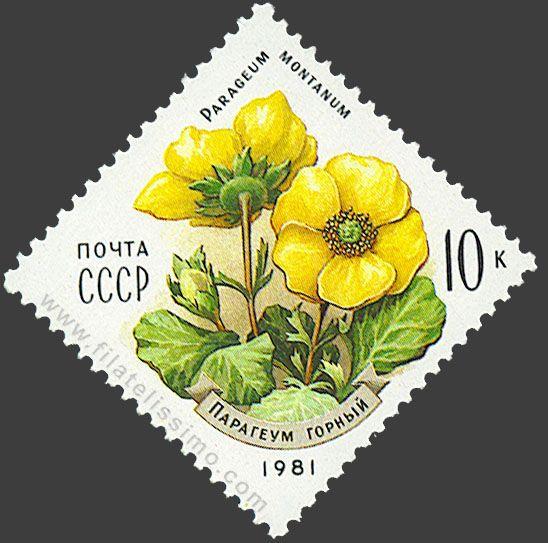Flora: Parageum montanum.                                                                                                                                                                                 Más