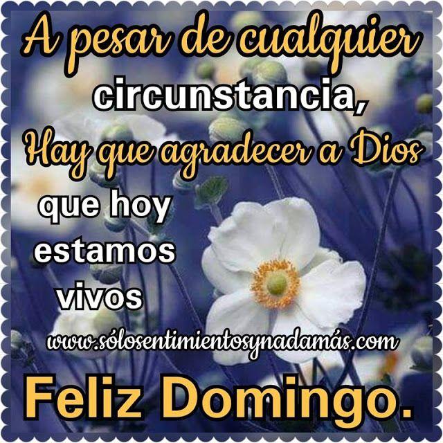 A Pesar De Cualquier Circunstancia Hay Que Agradecer A Dios Que Hoy Estamos Vivos Feliz Y Bendecido Domingo Feliz Domingo Feliz Domingo Bendiciones