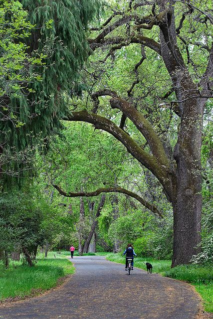 Bidwell Park in the Spring, Chico, California