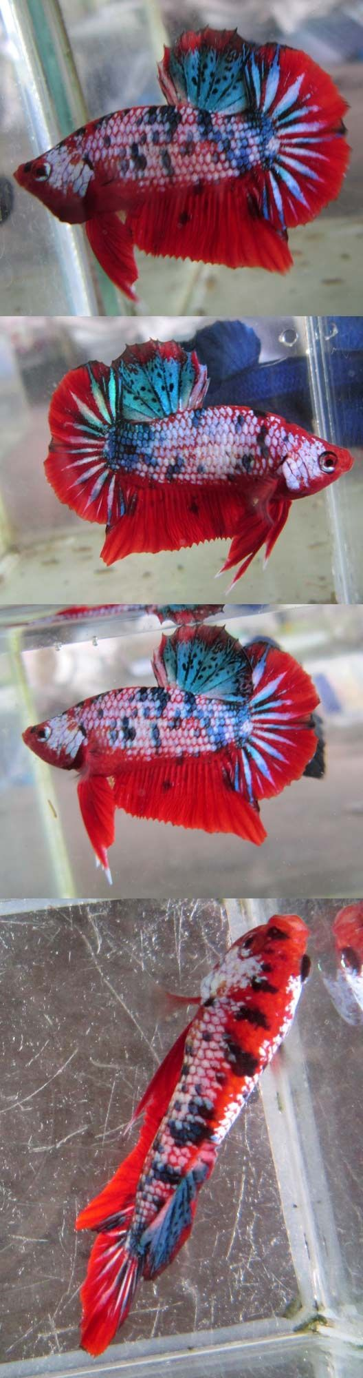 The 51 best Fish images on Pinterest | Tropical fish, Exotic fish ...