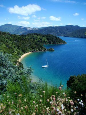 Bay near Picton, New Zealand <- Somewhere close to our hearts, yet so far away.