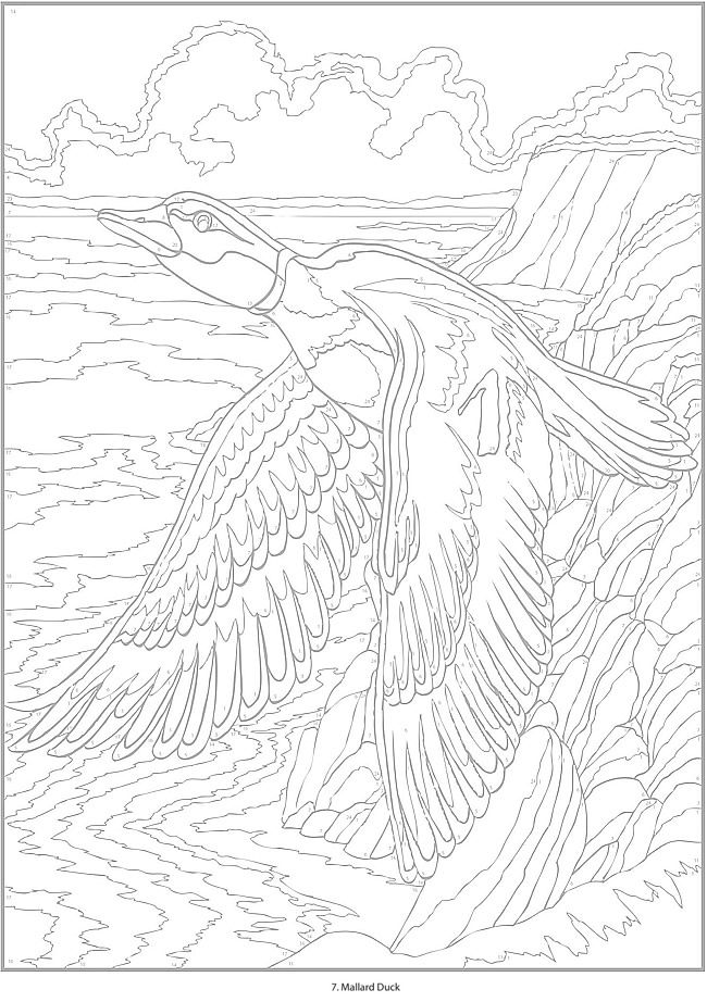 5036 best Coloring for adults images on Pinterest | Coloring books ...