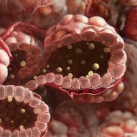 Apocrine gland secretions (e.g. Mammary gland) TheVisualMD HealthCare Educational Resources
