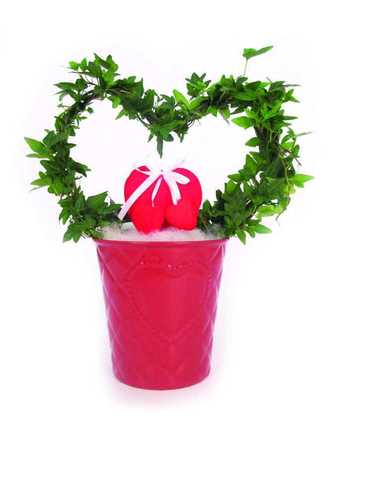 cuori, edera, piante, composizione, san valentino