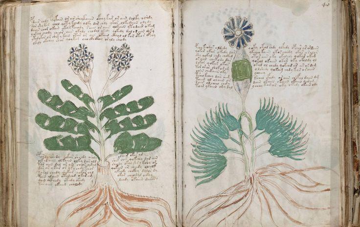 Écrit dans une langue inconnue et illustré d'étranges images, le manuscrit de…