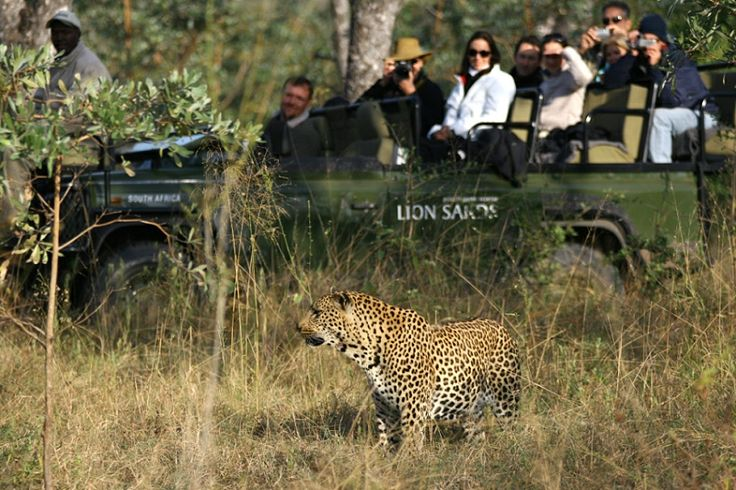 Lion Sands River Lodge game drive