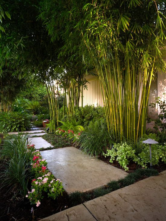 Asian inspired garden design bamboo trees along the for Japanese style landscaping