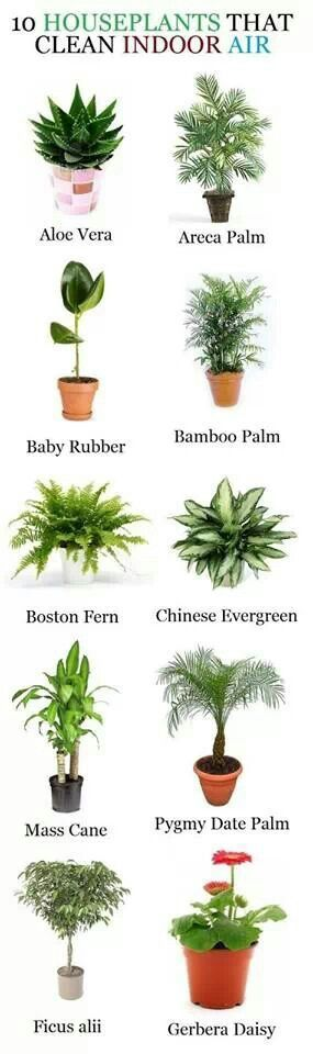 Lovely little image to help you see which plants can help you clean your indoor air :) Pretty useful I must say!