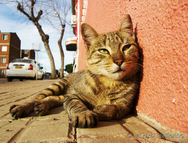 A female cat in the warm sunshine on one autumn afternoon by Alvaro Zefferino on 500px
