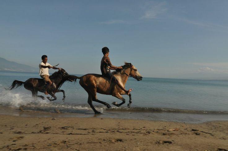 Sejumlah pemilik kuda pacu melatih kuda miliknya di Pantai Teluk Palu yang berpasir di Kelurahan Talise, Palu, Sulawesi Tengah, Selasa (18/3). Selain menjadi lokasi wisata, kawasan pantai itu juga dijadikan sebagai tempat pelatihan bagi kuda - kuda pacu oleh para pecinta olahraga berkuda. ANTARA FOTO/Mohamad Hamzah/Asf/pd/14.