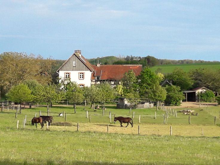 Forsthaus in idyllischer Lage mit Pferdeweiden in