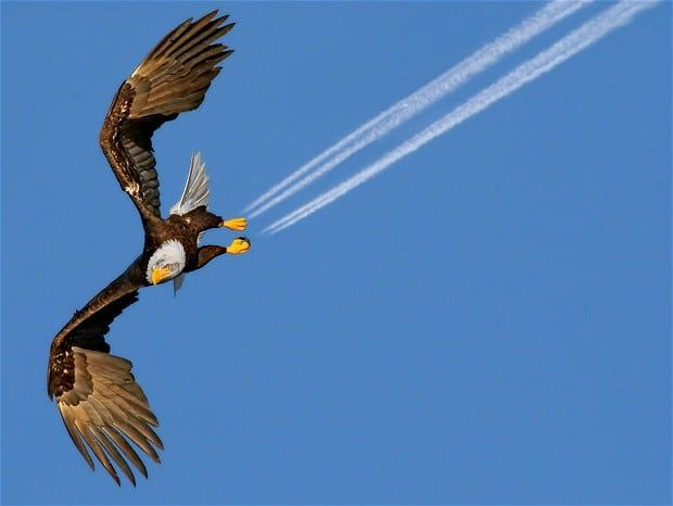 Fly Eagle Airlines!