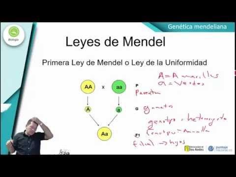 Clases De Biologia Genetica Medeliana I Education