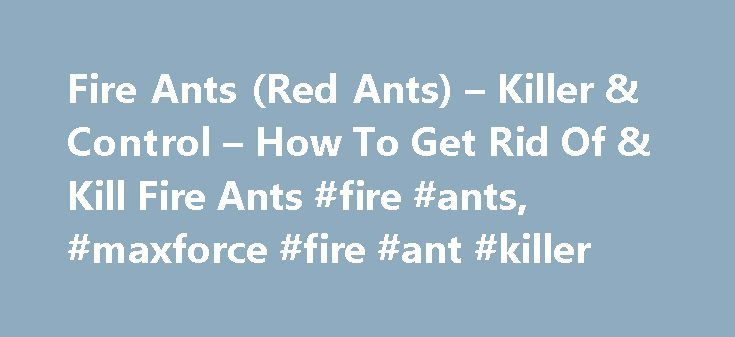 Fire Ants (Red Ants) – Killer & Control – How To Get Rid Of & Kill Fire Ants #fire #ants, #maxforce #fire #ant #killer http://uganda.nef2.com/fire-ants-red-ants-killer-control-how-to-get-rid-of-kill-fire-ants-fire-ants-maxforce-fire-ant-killer/  # Fire Ants, or Red Ants, stand alone as one of the most dangerous and annoying ant species that can be found in the United States. They are the only species of ants (that originate in the U.S.) that are known to cause serious bites on humans, and…