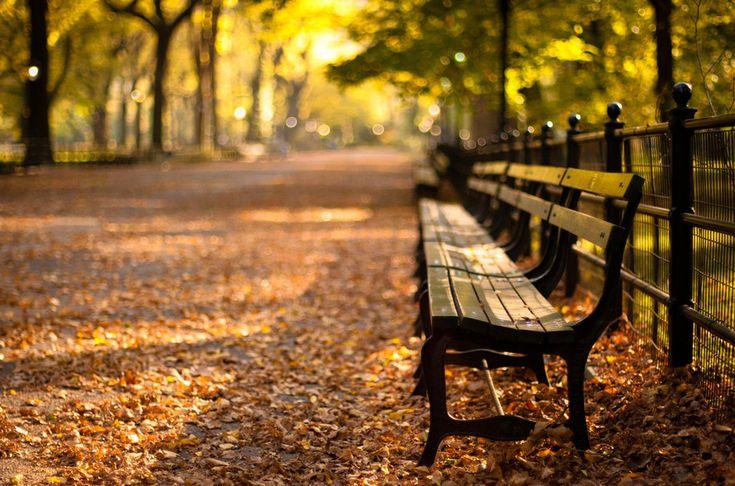 Central park, new york, automne, new york, sunset park Wallpaper