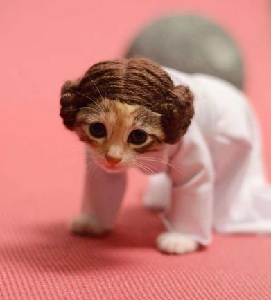 16 Cats in Costume That Are Too Cute for Words | RealClear