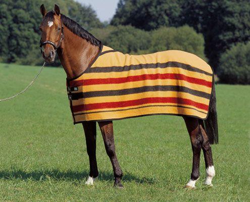 Mantas de invierno para caballos