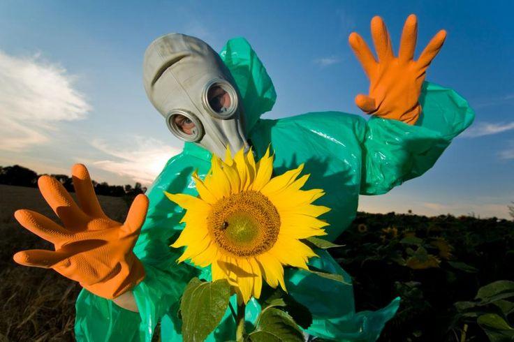 I Tjernobyl lever en masse dyr og planter i bedste velgående. Tåler de den radioaktive stråling bedre end mennesker?