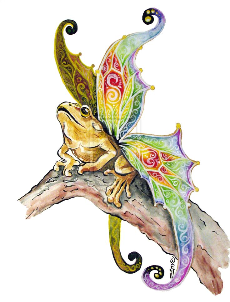 """Fairy Frogs: AKA A """"Butterfly Frog."""" These Creatures R"""