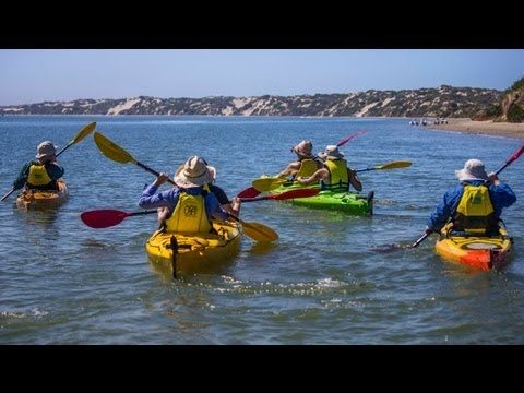 Canoe the Coorong (Eco kayaking tours). 40 mins from Mulberry Lodge. A great way to see some of the best of the Coorong.