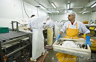 A man doing physical job of carrying a heavy box of fish. Motion blurred image. The image is part of Fish Processing Manufacture collection.