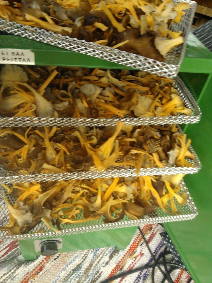 Sienten kuivaus