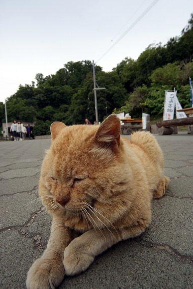 ライオンのような猫