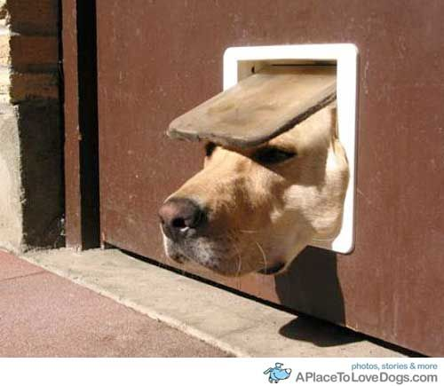 doggie door mishap