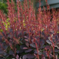 34 best images about plantes pour haie bas on pinterest for Plante 60 80