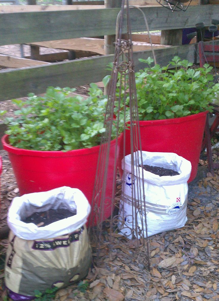 Recycle those Woven Plastic Feed Bags to grow potatoes.