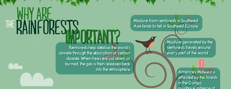This infographic highlights interesting facts about rainforests, and provides tips for how everyday people can make a difference in saving them, and the animals that call them home.