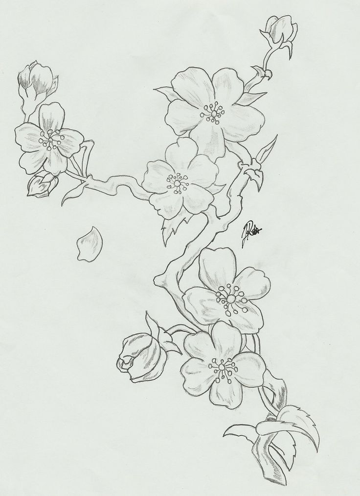 cherry_blossoms__branch_sketch_by_faytofallstars-d5gzuwk.jpg 900×1,238 pixels