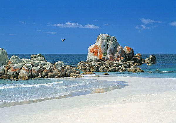 Picnic Rocks at Deep Creek Beach in Mount William National Park, Tasmania_ Australia