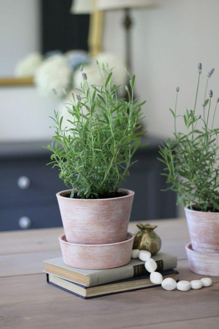 white washing terra cotta pots tips for growing lavender indoors bloggers 39 best diy ideas. Black Bedroom Furniture Sets. Home Design Ideas