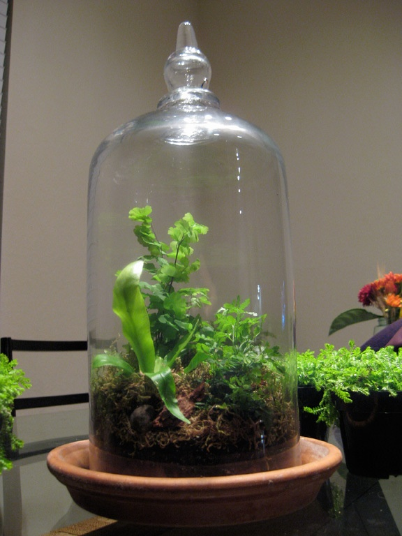 17 Best Images About Cloche Terrariums On Pinterest The
