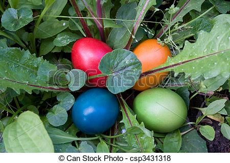 Stock photo available for sale at Can Stock Photo: Hiding Eggs In The Grass - Easter Tradition - stock image, images, royalty free photo, stock photos, stock photograph, stock photographs, picture, pictures, graphic, graphics